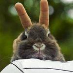 Cómo me gusta trollear a mi conejito en las fotos…