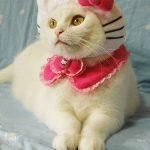 El disfraz más obvio para tu gato