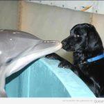 Foto tierna del día: delfín y perro
