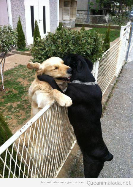 El amor entre vecinos es posible