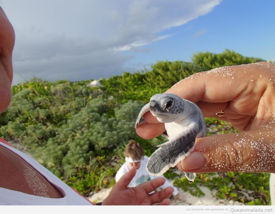 Imagen bonita y tierna de una totruga marina recién nacida