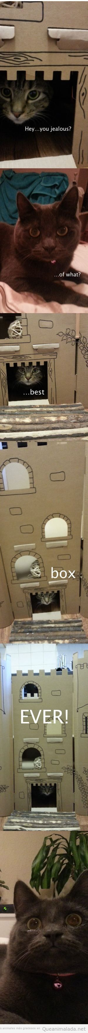 Imágenes curiosas de una caja para gatos en forma de castillo
