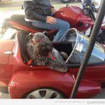 El perro más chulo del barrio