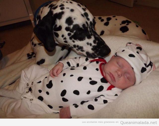 Foto bonita y graciosa de un bebé vestido de dálmata y el perro
