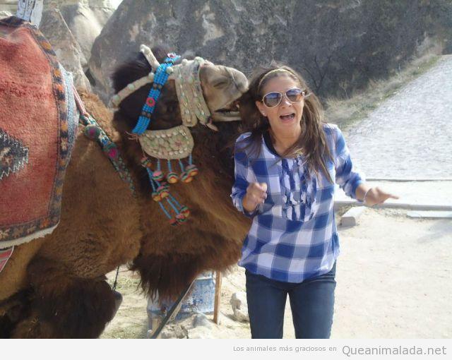 Foto graciosa de un camello que intenta comerse el pelo de una turista