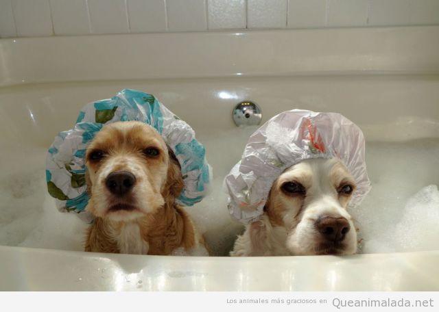 Así se bañan mis perritas