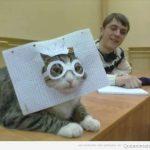 Cómo convertir a tu gato en un gafapasta en un minuto
