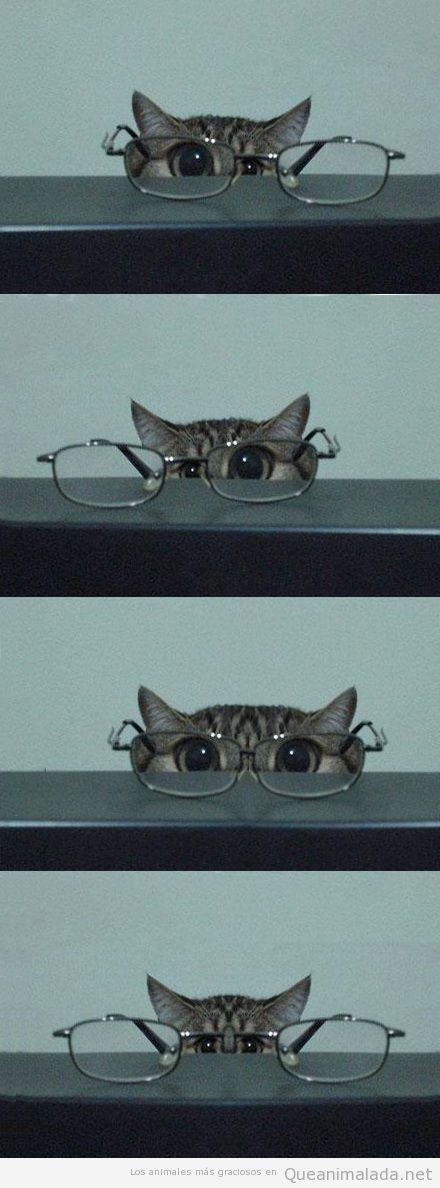 Imagen graciosa de un gato con gafas