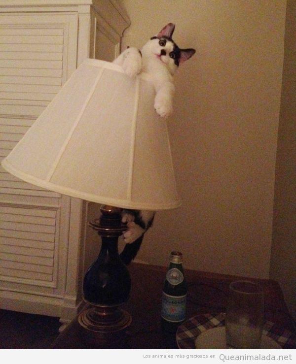 Foto divertida de un gato metido dentro de una lámpara