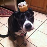 Me perdonas? Te he traído un muffin