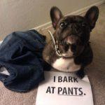 Confesiones de un bulldog francés