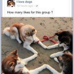 El club de la buena estrella, versión perros