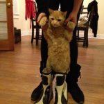 El gato con botas (de agua)