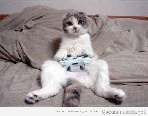 Gato gamer