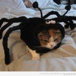 El gato araña