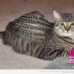 Nunca lleves a tu gato a una peluquería de negros...