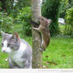 Gato vs hamster.. versión EEUU