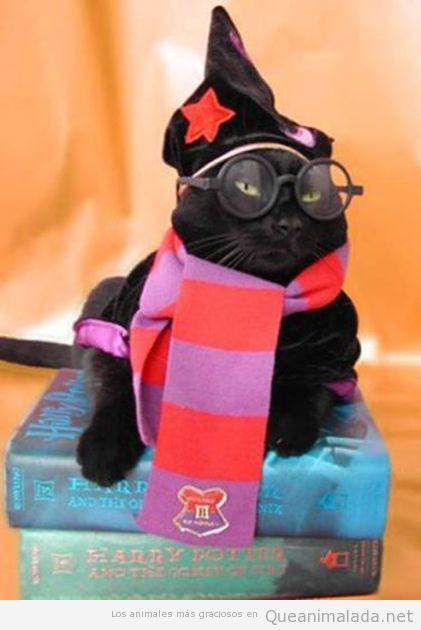 Este gato estudia en Howarts…