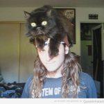 Utilidades que le puedes dar tu gato