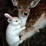 Foto super tierna del día: ciervo y conejito