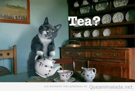 Would you like a cup of tea? (with British accent)