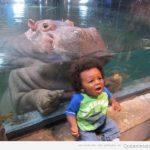 El hipopótamo que sale ridículamente bien en las fotos