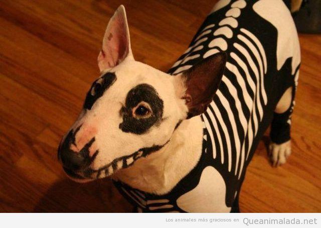 Disfraz de Halloween de esqueleto para perro