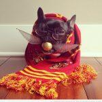 Qué estudiante de Hogwarts más interesante...