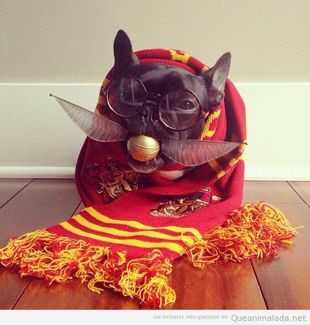 Qué estudiante de Hogwarts más interesante…