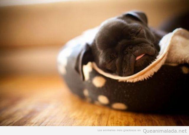 Imagen tierna del día: vaya siestecita…