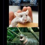 Animales con cara de flipaos