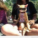 El gato más chulo...