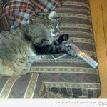 A ver quién tiene huevins de sacar al gato del sofá…