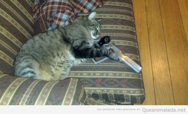 Foto graciosa de un gato durmiendo en el sofá con pistola en la mano