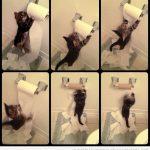 Gatito VS Rollo papel WC