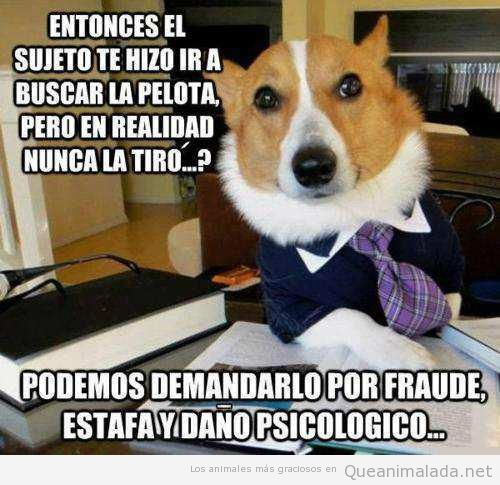 Cuidado, tu perro puede demandarte!