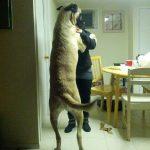 Bailando el chachachá con mi perrito…