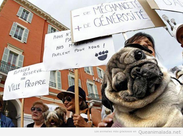El carlino manifestante
