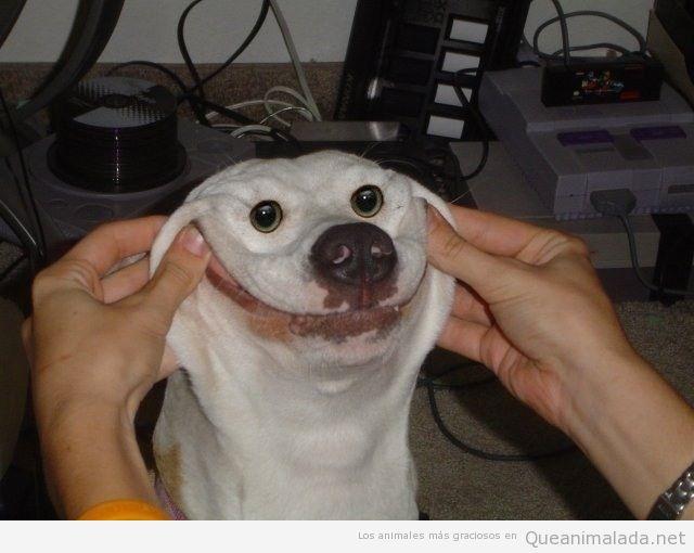 Imagen divertida de perro con sonrisa forzada