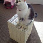 El gato mafioso returns