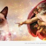 El gato gruñón dice NO