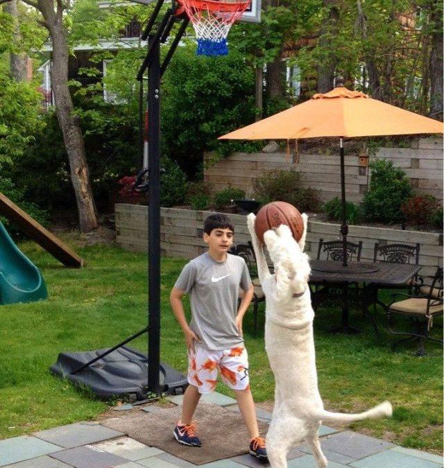Señores de la NBA, fíchenlo!