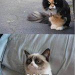 Conversación entre dos gatos gruñones…
