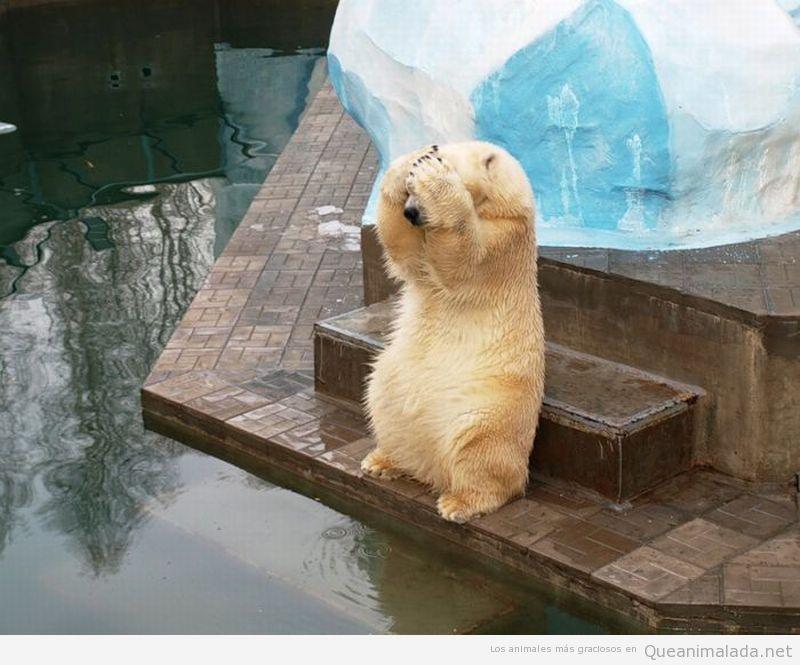 Foto graciosa oso polar ojos tapados
