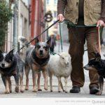 Paseando a las mascotas por la city…