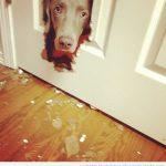 Te he dicho que es mejor que el perro no vea El Resplandor…
