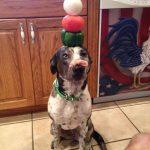 El perro equilibrista con más templanza del mundo