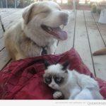 Perro feliz, gato gruñón