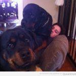 Me encanta estar tirao con mis perritos…