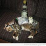 Cosas que puedes poner encima de tu gato mientras duerme